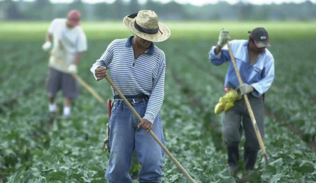83 000 $ à un travailleur agricole mexicain lésé